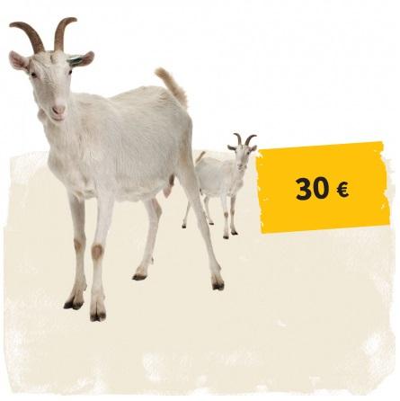 Link zum Spendenshop: Ziege und Button 30 Euro