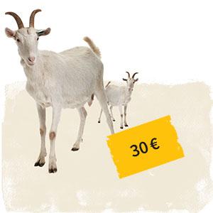 Zwei Ziegen mit Preisschild 30 Euro