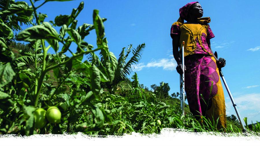 Afrikanische Frau steht vor ihren Tomatenpflanzen