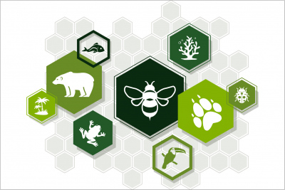 Mapbender meets Biodiversität